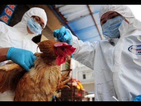 NEW CHINESE BIRD FLU!! May be worse than H7N9 Virus