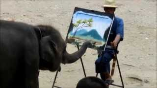 絵を描く象 Elephant Painting 【Mesa Elephant Camp】