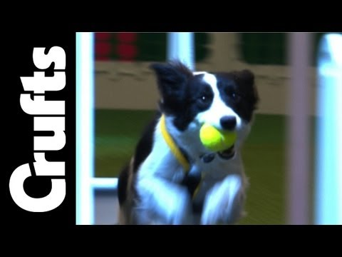 Flyball Team Finals - THE FINAL - Crufts 2012