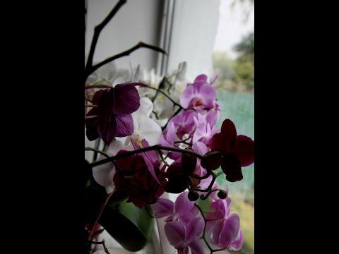 Орхидеи.Банный день.Пересадка орхидеи.