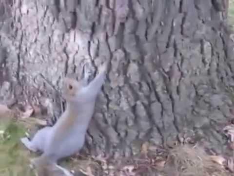 Squirrel Gets Drunk On Fermented Pumpkins