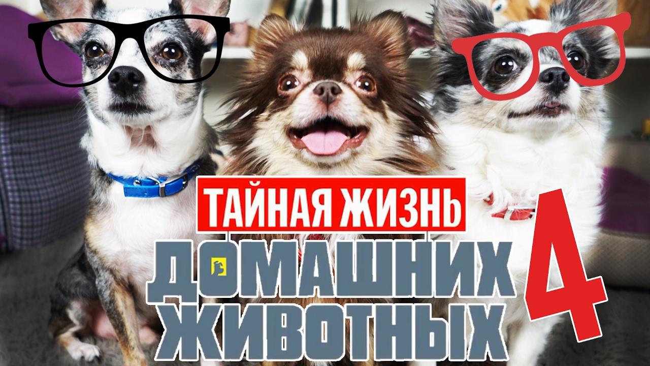 ГОВОРЯЩИЕ СОБАКИ УЧАТ СОБАКУ МИШУ ГОВОРИТЬ | Тайная жизнь домашних животных по русски 4 серия