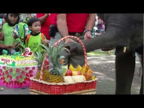celebrate gonzales elephant birthday at surabaya zoo