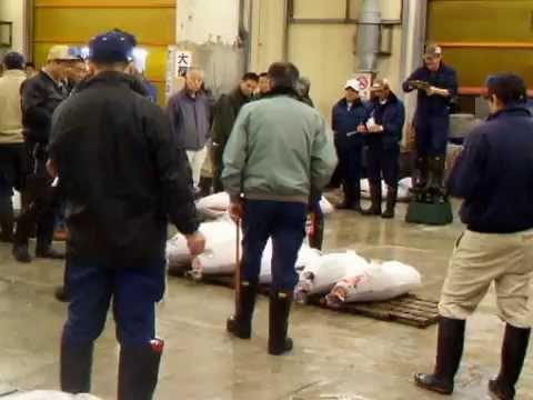 Tokyo Tsukiji fish Market- Bluefin tuna auction!***