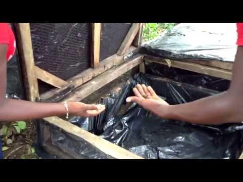 Myrtles free range snail farm in port harcourt , Nigeria