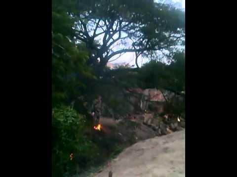 Talan árbol a orillas del río Manzanares y usan la madera para fogones #NoHayDerecho