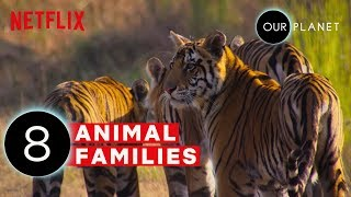 Cute Baby Animals and Their Moms | Our Planet | Netflix