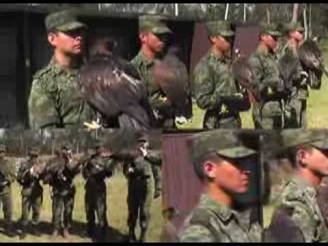 Colegio Militar única institución que preserva al águila real