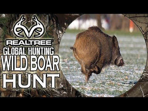 Wild Boar Hunting With Rugby Superstars! video