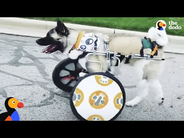 Dog's Mom Designs Prosthetics And Wheelchair For Him