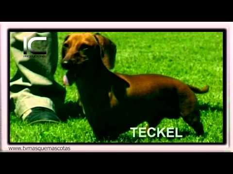 El Teckel