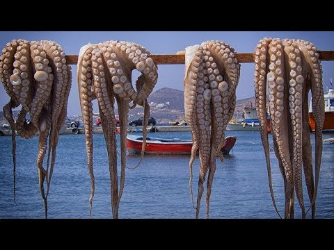 Octopus Catching and Octopus Processing Techniques