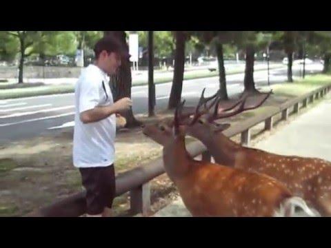 Nara Koen (Park) - Japan - part 1