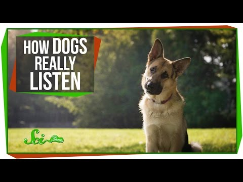 How Dogs Really Listen to Us. and How Pufferfish Puff