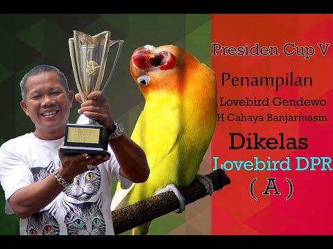 PRESIDEN CUP V - Penampilan Lovebird Gendewo Dikelas DPR A