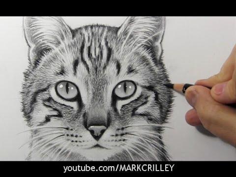 猫の絵を書く神業 | タイムラプス映像
