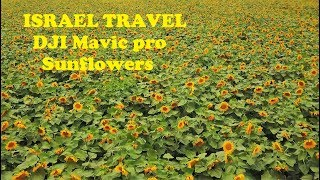 ISRAEL TRAVEL 4k - DJI Mavic pro - Sunflowers