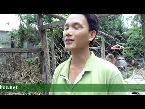 Mô hình đệm lót lên men trong chăn nuôi gà tại Cao Lãnh Đồng Tháp