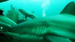 Shark Sightings on the Rise Near Shore 8/6/13
