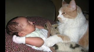 Adorable Cats Protecting and Loving Babies -  Cat Loves Baby Videos Compilation
