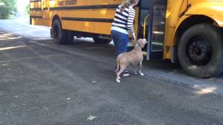 Lucas first day at Kindergarten getting on the bus