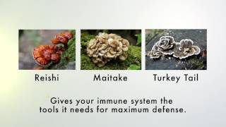 LPGN Products IMMUNE+++   YouTube