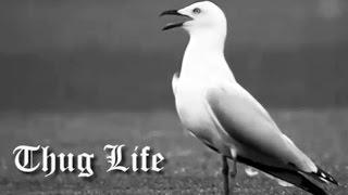 Seagull Thug Life