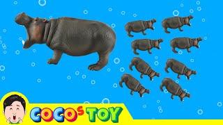 한국어ㅣ우리집 하마가 새끼를 낳았어요. 유아 동물만화, 숫자놀이, 동물이름 외우기ㅣ꼬꼬스토이