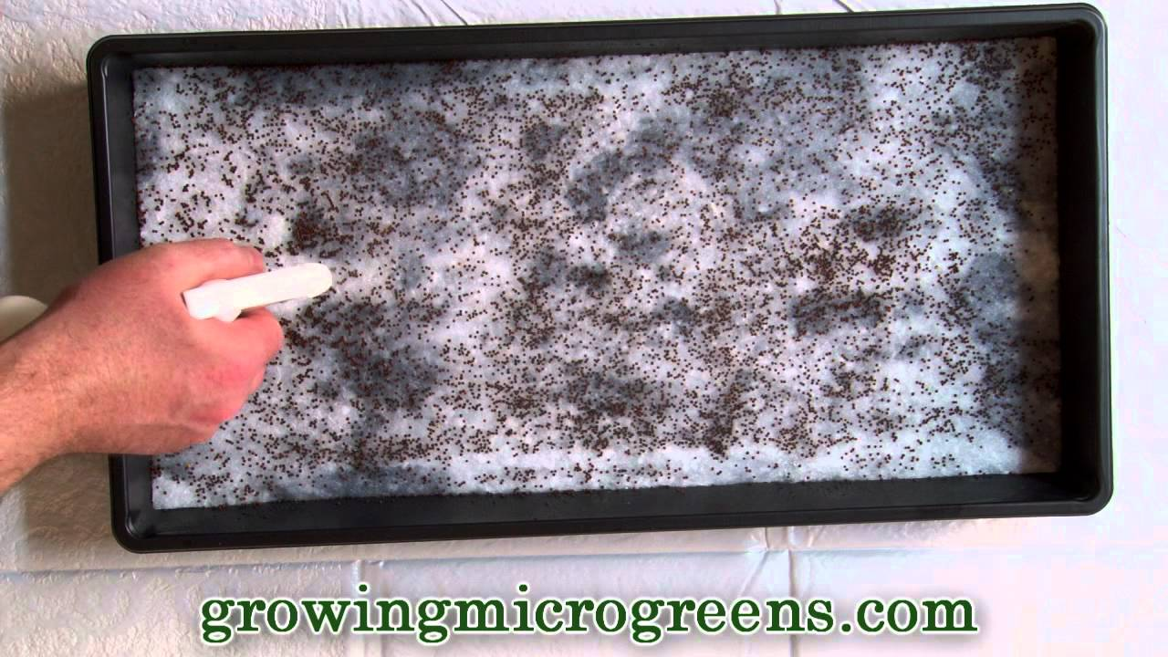 Growing Microgreens Hydroponic Method Part 1 Planting