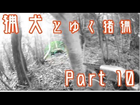 猟犬と狩猟 Part 10 巨大猪を逃がす  【閲覧注意】