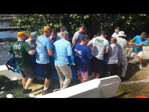 Sarasota's Mote Marine Laboratory rescuing a wounded manatee. Part 3