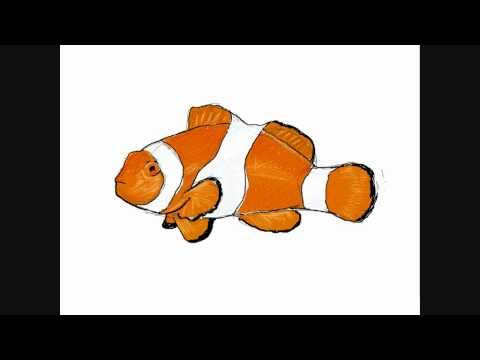Nemo Fish Drawings How to Draw a Clownfish