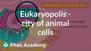 Eukaryopolis - The city of animal cells | Crash Course biology| Khan Academy