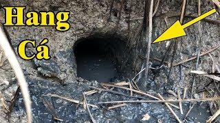 Kỳ lạ ! Những cái hang chứa đầy cá   Bắt cá trong hang sâu và kết quả   THÚ VUI MIỀN TÂY 63