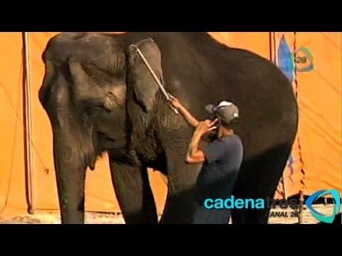 El maltrato a los animales en circos mexicanos