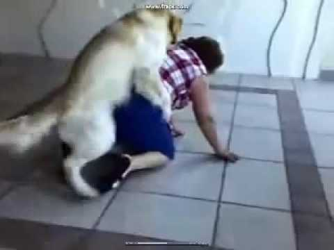 Dog Humping a Woman - Hilarious !!