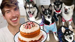 I Baked A Cake For My Puppies!