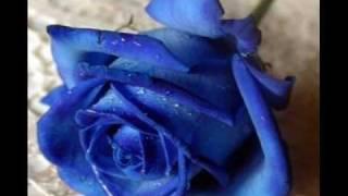 Watch Fabio Jr Alma Gemea video