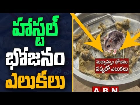 Rats found in midday meal in Kadapa Government school