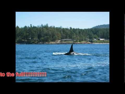 WHALE WARS SEASON 5 MUST SEE MAY 2012 JAPANESE BACK TO KILLING WHALES AGAIN
