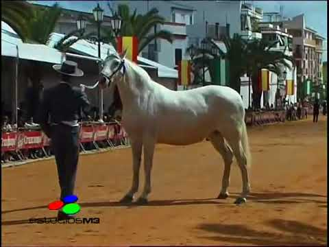 FERIA DEL CABALLO 1 DE 7. PRESENTACIÓN-MORFOLÓGICO.