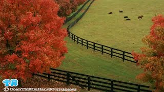 When Does Fall Start? Autumn Equinox Signals Season's Beginning | Gift Of Life