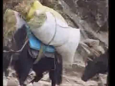 Safe Gaurd Everest -Sherpa Climber Temba Sherpa
