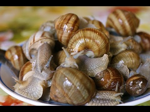Что едят ракушки в домашних условиях