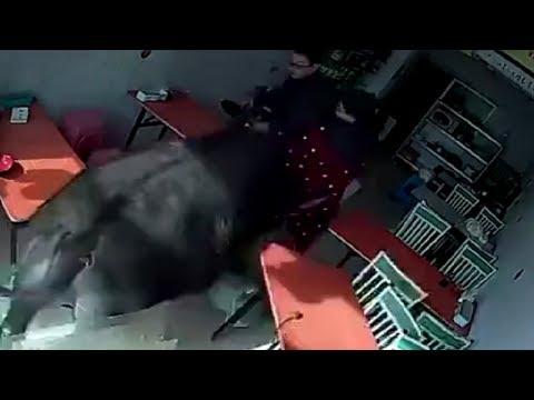 LiveLeak - Buffalo rams woman into restaurant