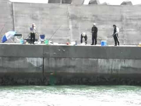 北海道・十勝、浜大樹漁港の鮭釣り風景