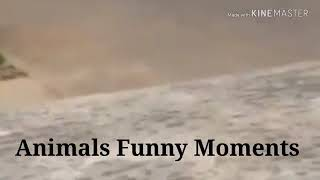 Animals Funny Moments