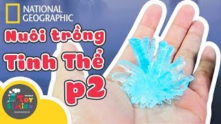 Trọn bộ 8 Tinh Thể  Mega Crystal Growing Lab từ National Geographic ToyStation 273