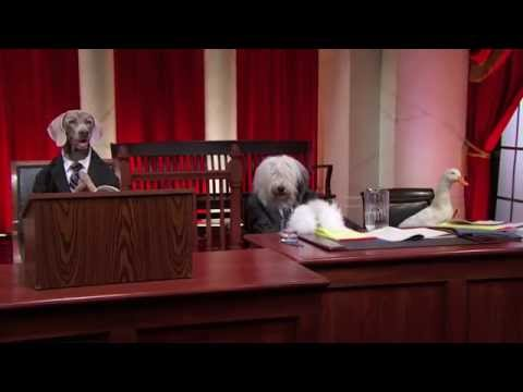 Supreme Court (With Dogs) - #puppyjustice #realanimalsfakepaws - Last Week Tonight With John Oliver