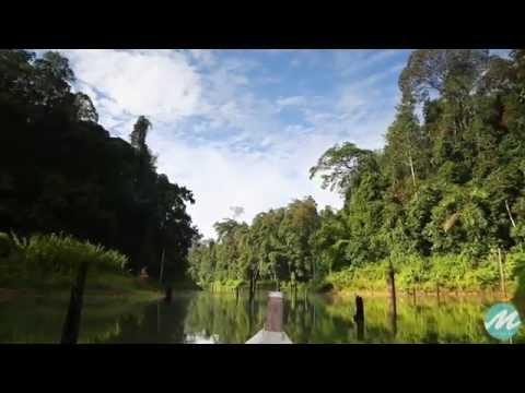 Commercial : Tourism Perak Casuarina Houseboat